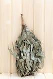 Eucalyptus broom for a bath Stock Image
