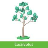 Eucalyptus cartoon tree Royalty Free Stock Photos