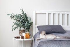 Eucalyptus dans l'intérieur, dans la chambre à coucher par le lit photographie stock libre de droits