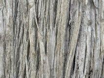 Eucalyptus en bois de texture photographie stock