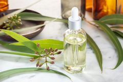 Eucalyptus essential oil. Eucalyptus oil on glass bottle with dropper. Herbal medicine royalty free stock images