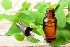 Eucalyptus essential oil with glass dropper and fresh eucalyptus leaves on the wooden table. Eucalyptus essential oil and fresh eucalyptus leaves on the wooden royalty free stock photos