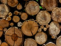 Eucalyptus firewood trunk tree piled up texture - pattern stacked fire wood stock photos