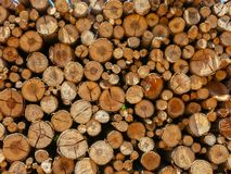 Eucalyptus firewood trunk tree piled up texture - pattern stacked fire wood royalty free stock photography