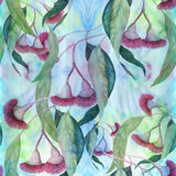 Eucalyptus - flowers and leaves, medicinal, perfumery and cosmetic plants. Watercolor. Stock Images