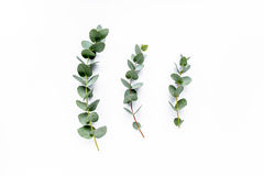 Eucalyptus. Green leaves eucalyptus on white background. flat lay, top view stock photography