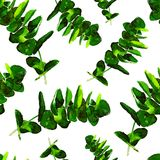 Eucalyptus Greenery Leaves Seamless Pattern. Watercolor Hand Painted Illustration of  Eucalyptus Leaves Background Texture, Wrapping Paper, Textile, Fabric or Royalty Free Stock Photos
