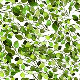 Eucalyptus Greenery Leaves Seamless Pattern. Watercolor Hand Painted Illustration Eucalyptus Leaves. Background Texture, Wrapping Paper, Textile, Fabric or Stock Photography