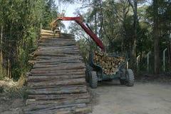 Eucalyptus harvest. To industrial use in brazil Stock Photos