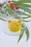 Eucalyptus herbal tea. Royalty Free Stock Images
