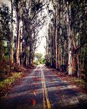 Eucalyptus Highway Stock Photos