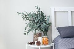 Eucalyptus in the interior, in the bedroom by the bed. The cat on the bed breed Neva Masquerade. On the table decorative orange chips, cones, candles stock photos