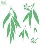 eucalyptus isolerad bakgrund låter vara white vektor illustrationer