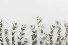 Eucalyptus leaves border top view. Flat lay style. Eucalyptus leaves border top view. Flat lay stock images