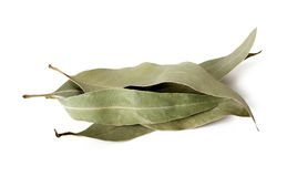 Eucalyptus leaves. Dried eucalyptus leaves isolated on white background Stock Image