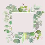 Eucalyptus leaves on white background. Frame made of eucalyptus branches. Flat lay, top view, copy space vector illustration