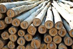 Eucalyptus Log Stock Images