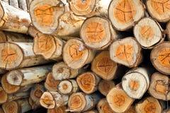 Eucalyptus Log Royalty Free Stock Photo