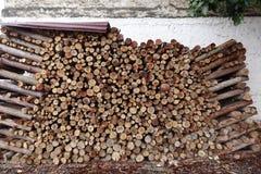 Eucalyptus log Stock Photography
