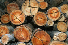 Eucalyptus logs Stock Images