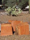 Eucalyptus logs Stock Image