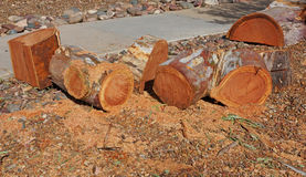 Eucalyptus logs Stock Photos