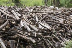 Eucalyptus logs Royalty Free Stock Photo