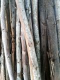 eucalyptus logs Royalty Free Stock Image