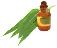 Eucalyptus Oil with leaves Stock Photography