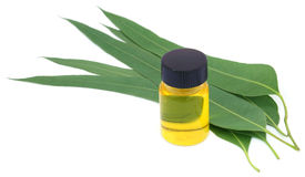 Eucalyptus Oil with leaves. Over white background Stock Images