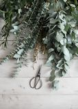 Eucalyptus plant and scissors on a wooden white table. mock-up. view from above Stock Image