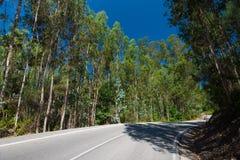 Eucalyptus plantation in Galicia, Spain Stock Photo