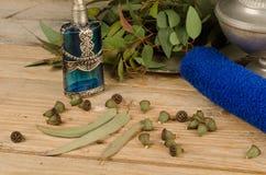 Eucalyptus seeds stock photo