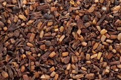 Eucalyptus seeds with plant material Stock Image