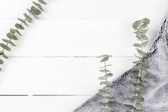 Eucalyptus Silver Dollar plant leaves on white wood panel background with grey fur royalty free stock images
