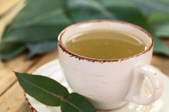 Eucalyptus Tea Stock Photo