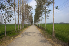 Country road in the Punjab Royalty Free Stock Images