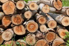 Eucalyptus tree, Pile of wood logs for industry Royalty Free Stock Image