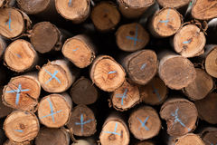 Eucalyptus tree, Pile of wood logs ready Royalty Free Stock Photos