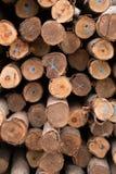 Eucalyptus tree, Pile of wood logs ready Stock Photography