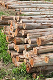 Eucalyptus tree, Pile of wood logs Royalty Free Stock Images