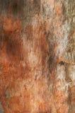 Eucalyptus Tree Trunkz Royalty Free Stock Images