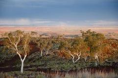 Eucalyptus Trees - Australian Outback - Pilbara Stock Image