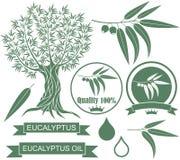 Eucalyptus. Vector illustration (EPS 10 Stock Photo