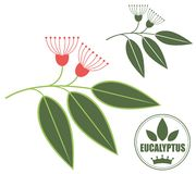 Eucalyptus. Vector illustration (EPS 10 Royalty Free Stock Photography