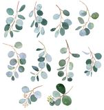Eucalyptus watercolor greenery twigs illustrations. Eucalyptus green watercolor twigs illustrations Stock Photo