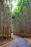 Eucalyptus way Stock Images