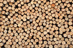 Eucalyptus wood royalty free stock image