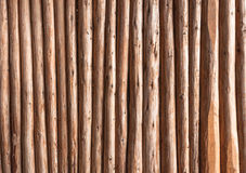 Eucalyptus wood background or wood texture. Which vertical wooden stick Royalty Free Stock Photo