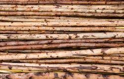 Eucalyptus wood Royalty Free Stock Photography